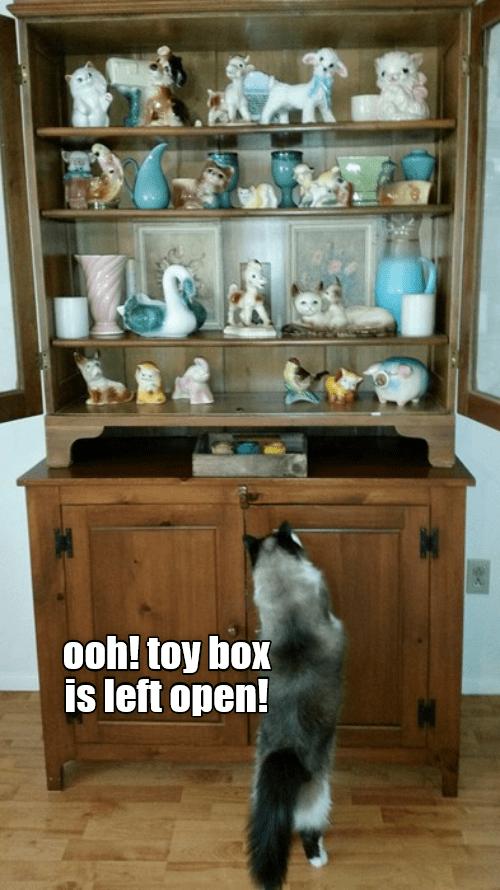 cat memes - 9346506240