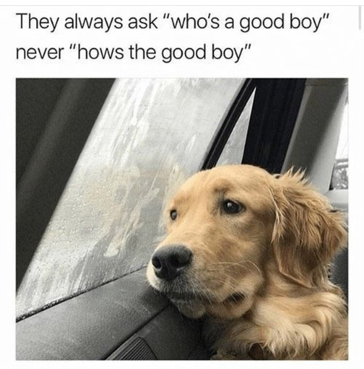 "Dog meme that reads, ""They always ask 'who's a good boy' never 'hows the good boy'"""