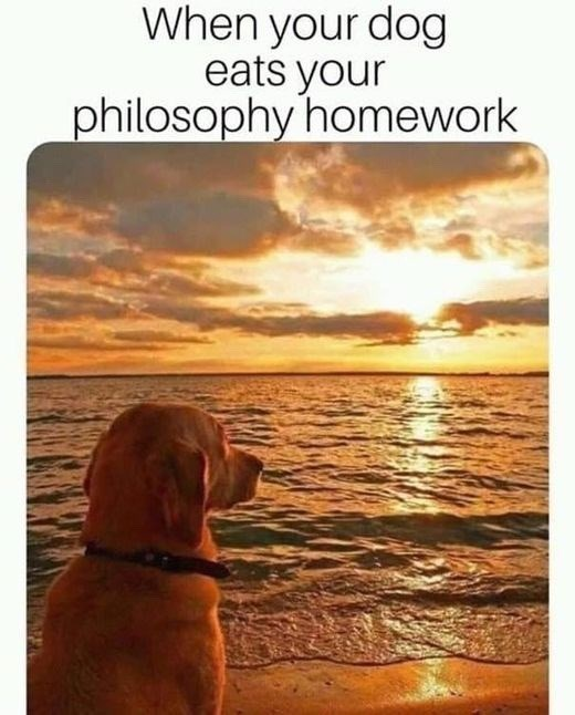 """Meme that reads, """"When your dog eats your philosophy homework"""""""