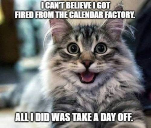Cat - OCAN'T BELIEVE I GOT FIRED FROM THE CALENDAR FACTORY ALLI DID WAS TAKE A DAY OFF.
