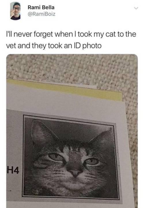Cat - Rami Bella @RamiBoiz Ill never forget when I took my cat to the vet and they took an ID photo H4 H-4