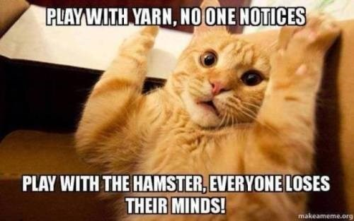 Cat - PLAY WITH YARN, NOONE NOTICES PLAY WITH THE HAMSTER, EVERYONE LOSES THEIR MINDS! makeameme.org