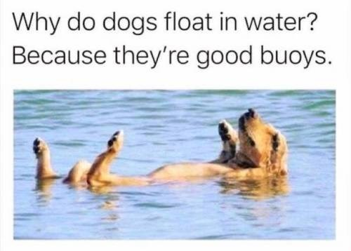 Adaptation - Why do dogs float in water? Because they're good buoys.