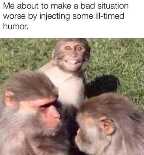 Rhesus macaque - Me about to make a bad situation worse by injecting some il-timed humor.