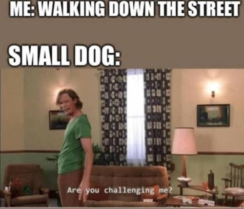 Furniture - ME: WALKING DOWN THE STREET SMALL DOG: H 181 Are you challenging me?