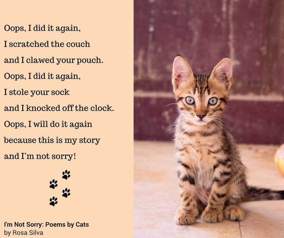 Cat - Oops, I did it again, I scratched the couch and I clawed your pouch. Oops, I did it again, I stole your sock and I knocked off the clock. Oops, I will do it again because this is my story and I'm not sorry! I'm Not Sorry: Poems by Cats by Rosa Silva
