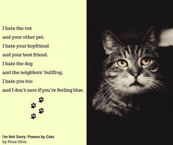 Cat - I hate the vet and your other pet. I hate your boyfriend and your best friend. I hate the dog and the neighbors bullfrog. I hate you too and I don't care if you're feeling blue I'm Not Sorry: Poems by Cats by Rosa Silva