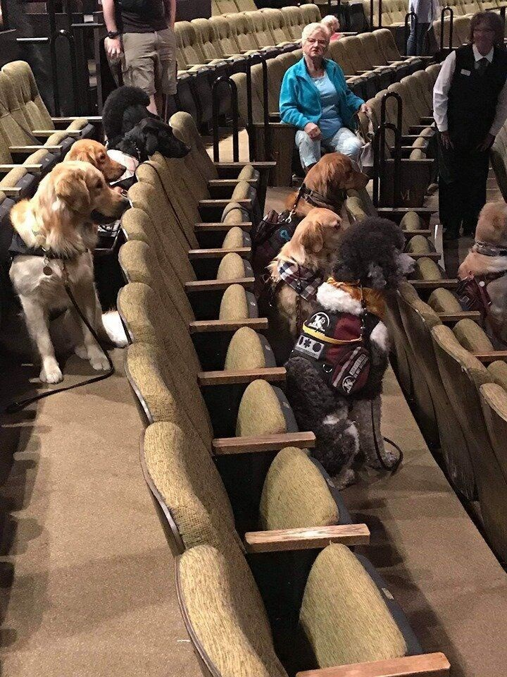 dogs in theater - Fur - GE