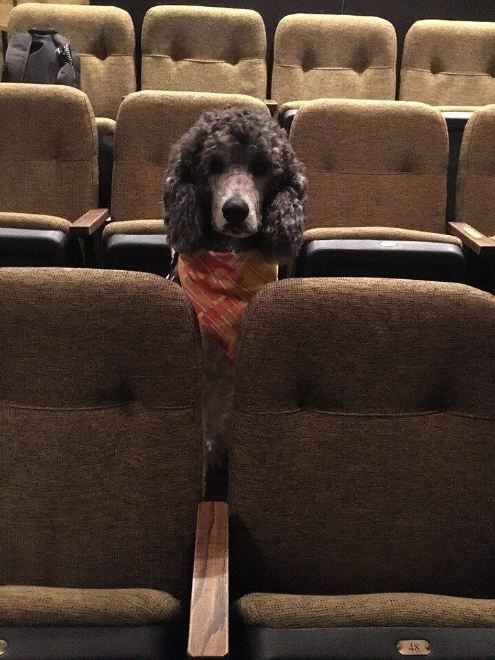 dogs in theater - Dog - 48