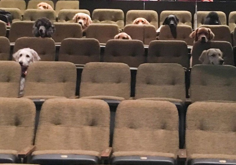 dogs in theater - Chair