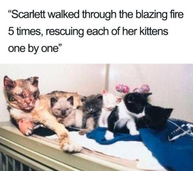 """wholesome - Canidae - """"Scarlett walked through the blazing fire 5 times, rescuing each of her kittens one by one"""""""