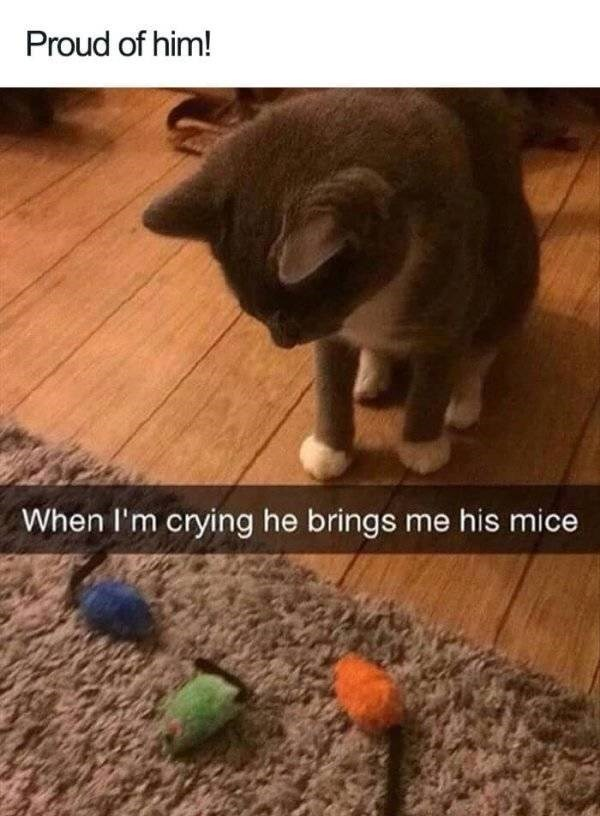 wholesome - Cat - Proud of him! When I'm crying he brings me his mice