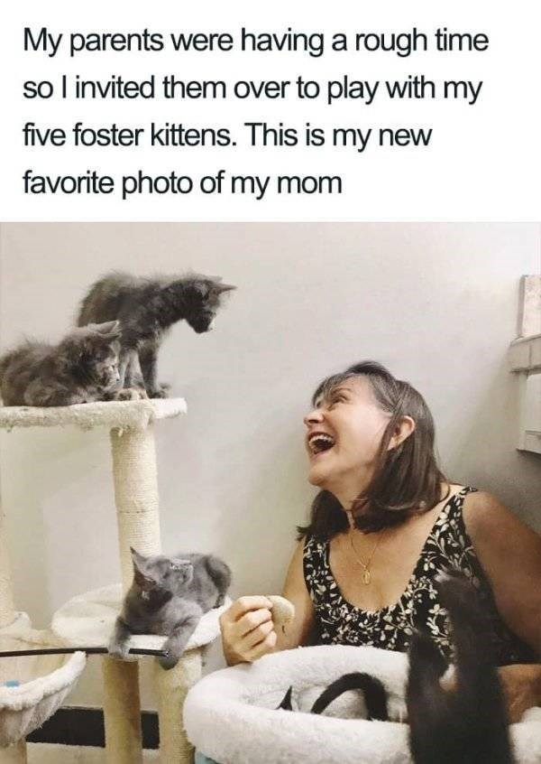 wholesome - Cat - My parents were having a rough time so l invited them over to play with my five foster kittens. This is my new favorite photo of my mom
