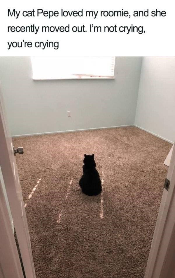 wholesome - Floor - My cat Pepe loved my roomie, and she recently moved out. I'm not crying, you're crying