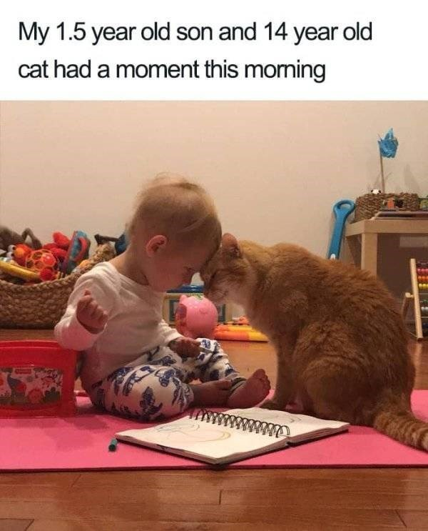 wholesome - Adaptation - My 1.5 year old son and 14 year old cat had a moment this moming