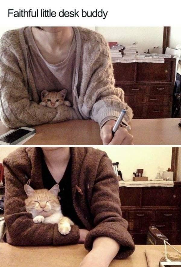 wholesome - Cat - Faithful little desk buddy
