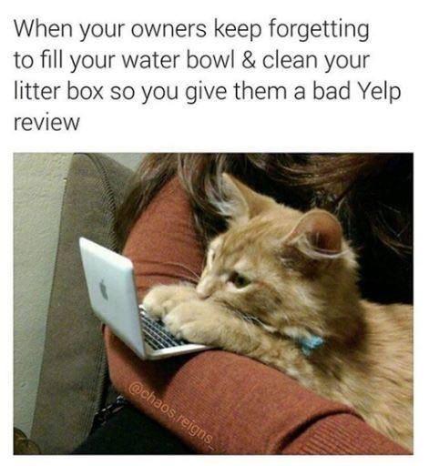 cat memes - 9346716160