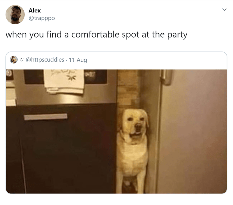 Dog - Alex @trapppo when you find a comfortable spot at the party @httpscuddles 11 Aug