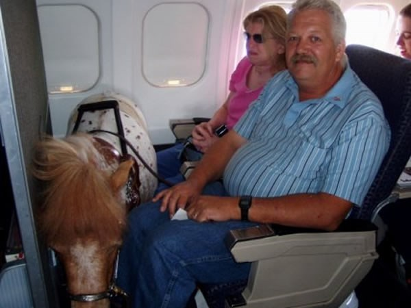 man and woman sitting on airplane with miniature horse in front of them