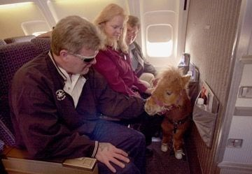 couple sitting in airplane with miniature horse standing in front of them