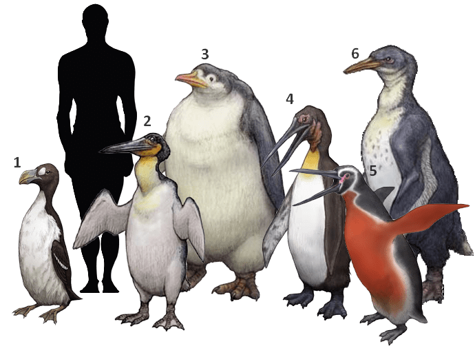 computer generated image of man standing with extinct large sea birds of new zealand