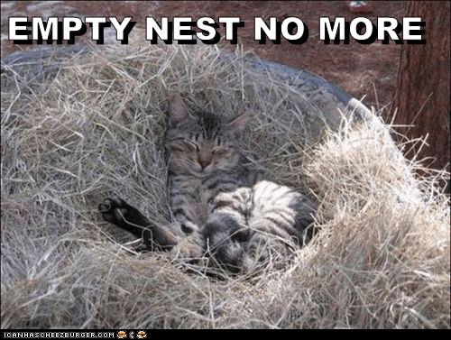 nest birds Cats cat memes - 9346782464