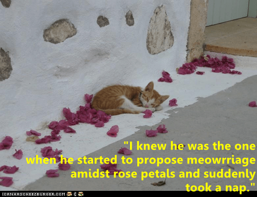 marriage cute cat memes - 9346782720