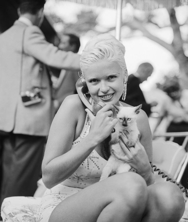 celebs and cats - Photograph