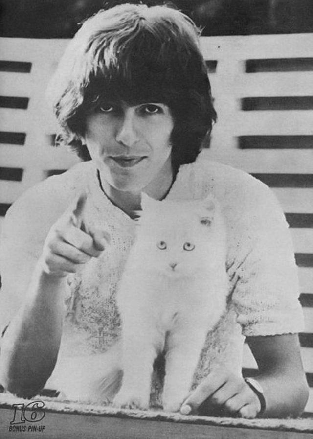 celebs and cats - Photograph - BONUS PIN-UP