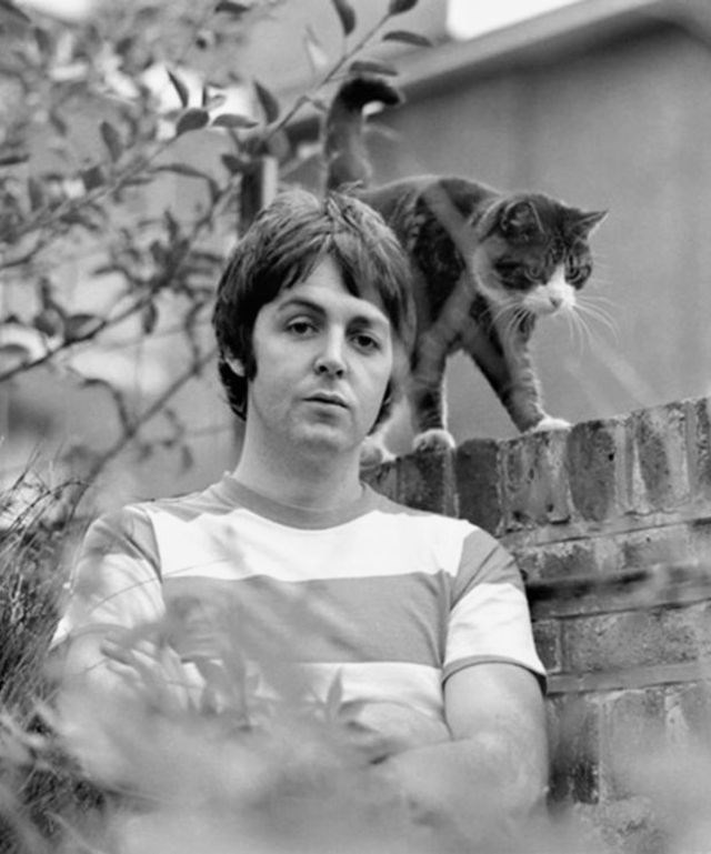celebs and cats - Cat