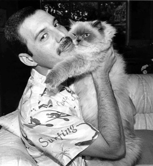 celebs and cats - Cat - Sunfing