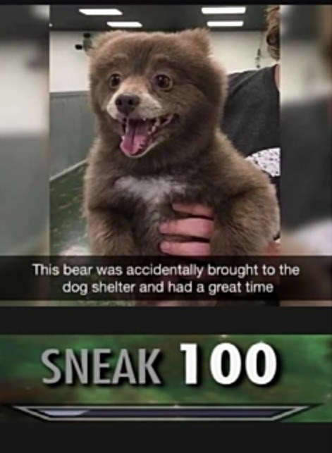 Wholesome animal meme - Photo caption - This bear was accidentally brought to the dog shelter and had a great time SNEAK 100