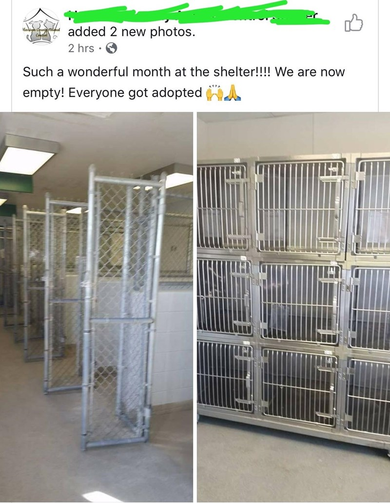 Wholesome animal meme - Cage - added 2 new photos. aisgn Cotlel 2 hrs . Such a wonderful month at the shelter!!!! We are now AA empty! Everyone got adopted