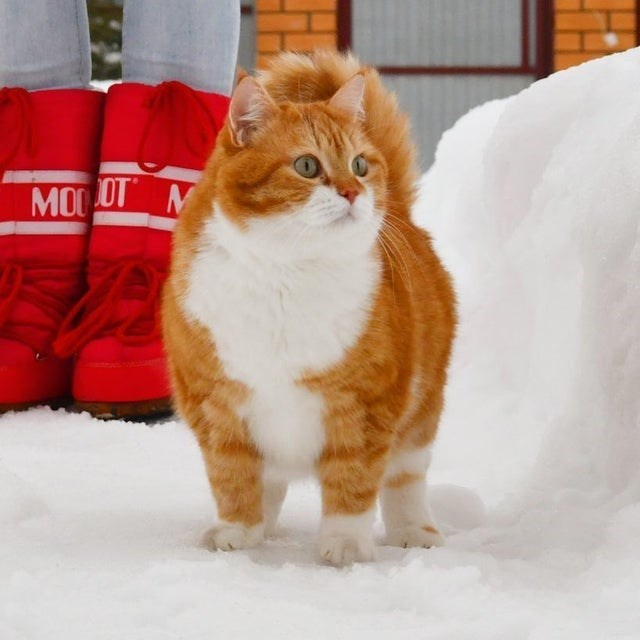 Cat - MODDT M