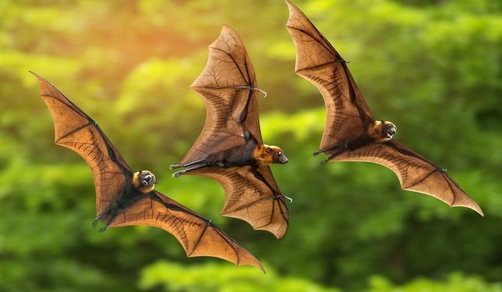 three bats flying against green trees at sunset