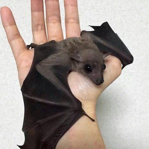 cute black bat resting on someone's hand