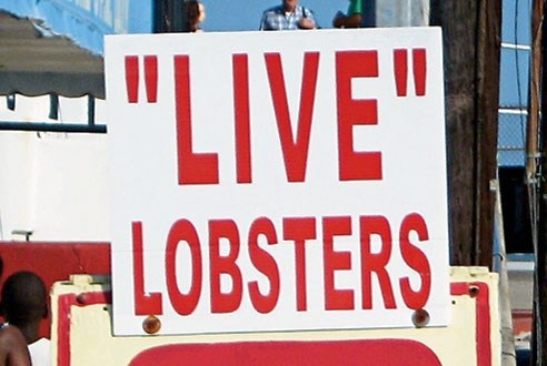 """quotation marks - Font - """"LIVE"""" LOBSTERS"""