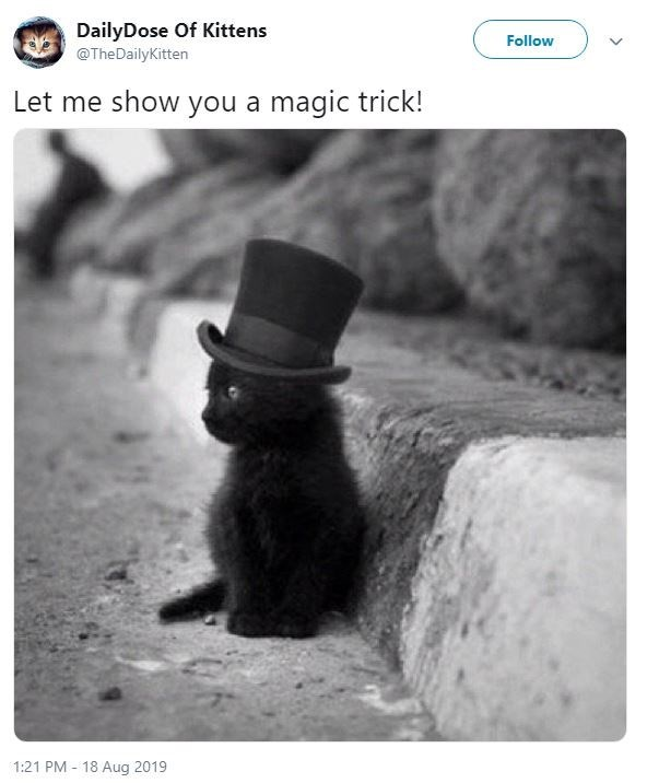 Black cat - DailyDose Of Kittens @TheDailyKitten Follow Let me show you a magic trick! 1:21 PM 18 Aug 2019