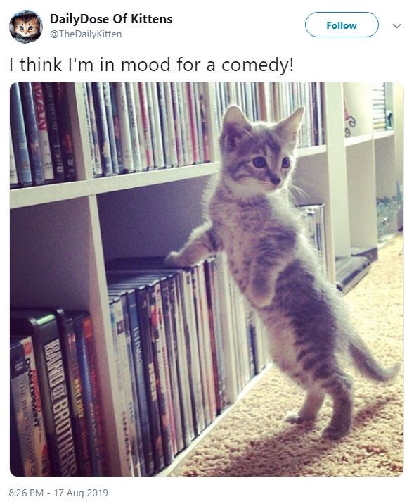Cat - DailyDose Of Kittens @TheDailyKitten Follow I think I'm in mood for a comedy! 8:26 PM 17 Aug 2019 IEBAND OF