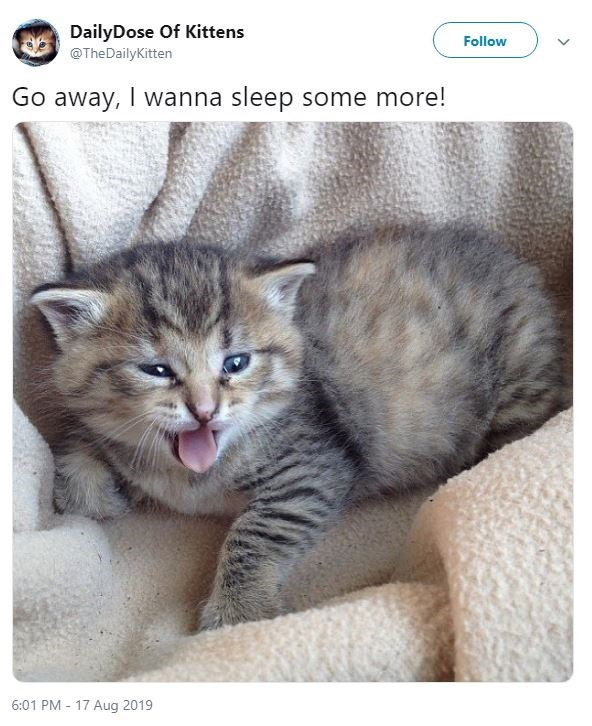 Cat - DailyDose Of Kittens Follow @TheDailyKitten Go away, I wanna sleep some more! 6:01 PM 17 Aug 2019