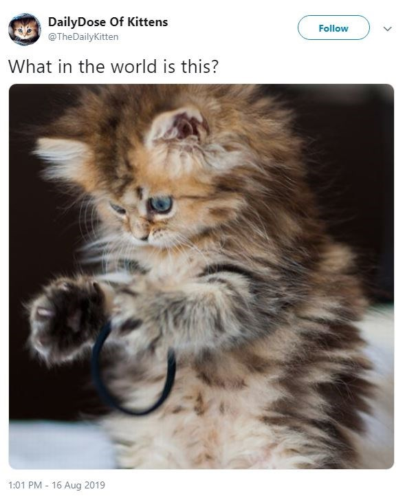 Cat - DailyDose Of Kittens Follow @TheDailyKitten What in the world is this? 1:01 PM 16 Aug 2019