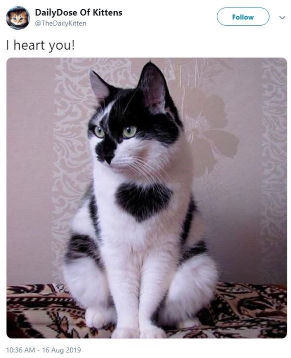 Cat - DailyDose Of Kittens Follow @TheDailyKitten I heart you! 16 Aug 2019 10:36 AM