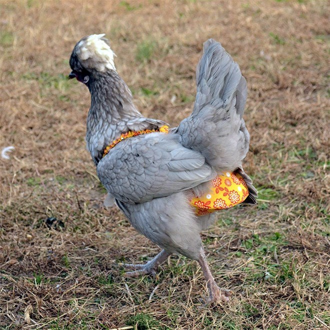 chicken diaper - Bird