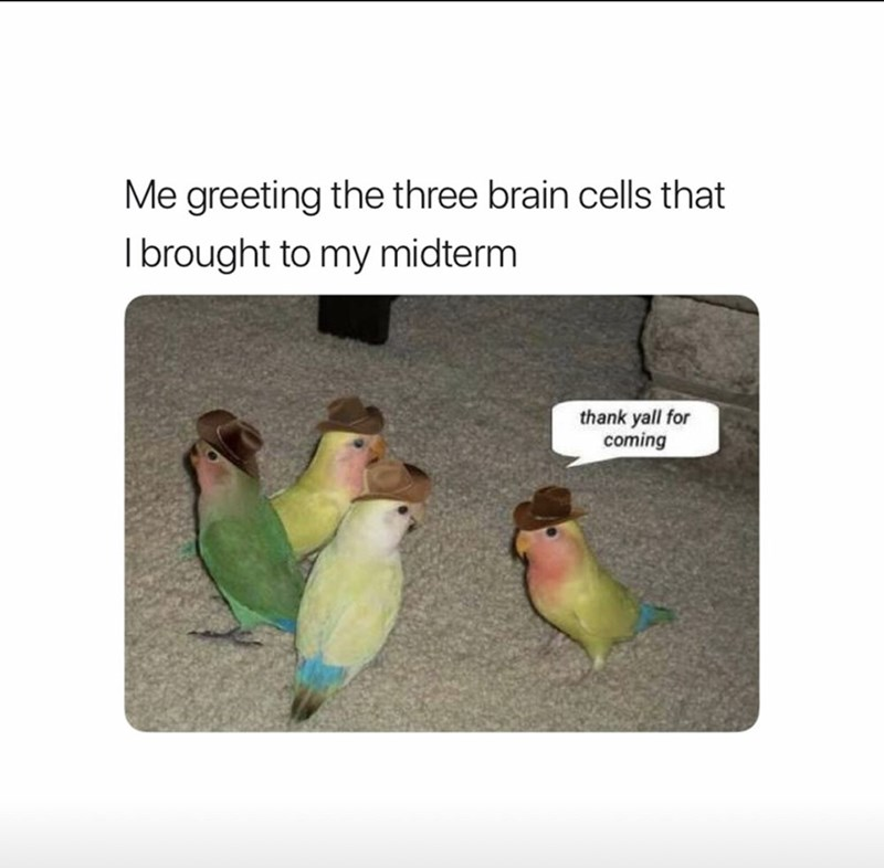 Bird - Me greeting the three brain cells that Ibrought to my midterm thank yall for coming