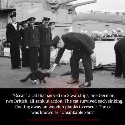 """Photo caption - """"Oscar"""" a cat that served on 3 warships, one German, two British, all sank in action. The cat survived each sinking, floating away on wooden planks to rescue. The cat was known as """"Unsinkable Sam""""."""