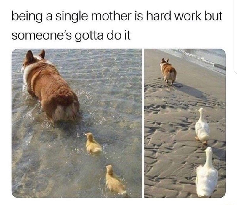 Dog - being a single mother is hard work but someone's gotta do it