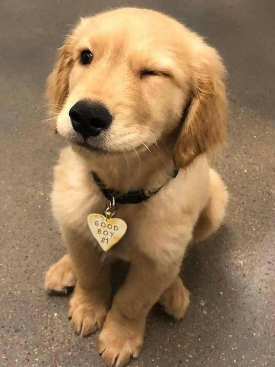 Dog - GOOD 6OY #1