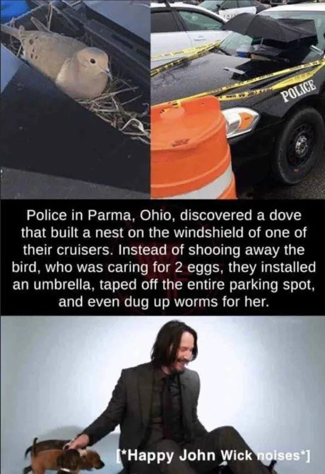 """Meme that reads, """"Police in Parma, Ohio, discovered a dove that built a nest on the windshield of one of their cruisers. Instead of shooing away the bird, who was caring for 2 eggs, they installed an umbrella, taped off the entire parking spot, and even dug up worms for her; [Happy John Wick noises*]"""""""