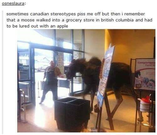 """Tumblr post that reads, """"sometimes canadian stereotypes piss me off but then i remember that a moose walked into a grocery store in british columbia and had to be lured out with an apple"""""""