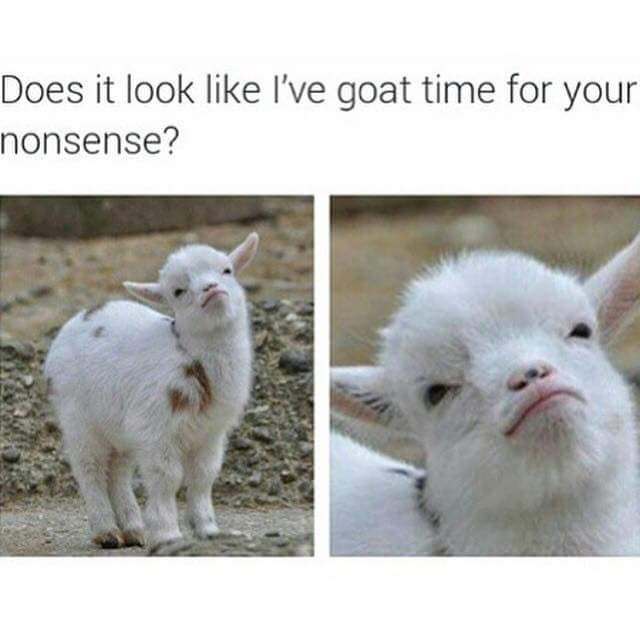 Goats - Does it look like I've goat time for your nonsense?
